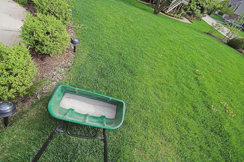 Entretenir sa pelouse sans engrais c 39 est possible Pelouse entretien