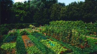 Jardiner écolo : facile !