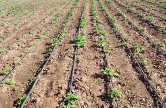 Irrigation goutte à goutte : comment ça marche ?