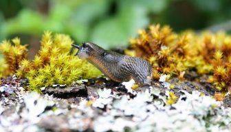 Eliminer les limaces de façon écologique : nos conseils